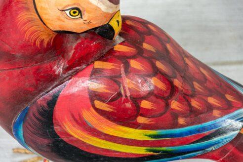 Czerwona papuga 5