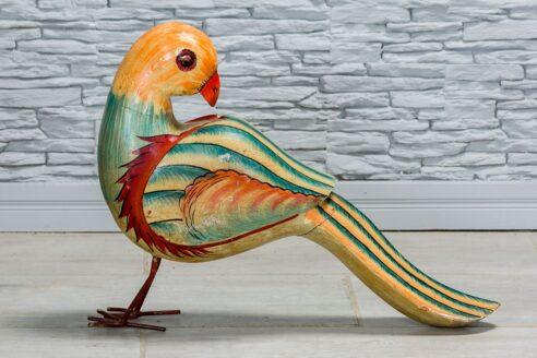 Pomarańczowo-niebieska papuga 1